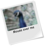 Mouse over me